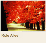 Rote Allee